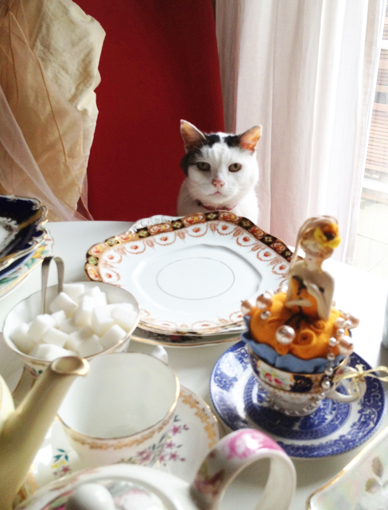 funny cat at the table